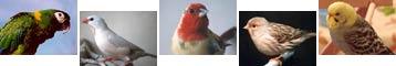 Foto - fugle