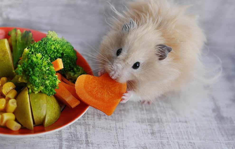 hamster yem